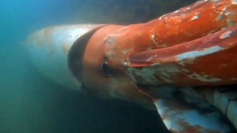 Un calamar gigante apareció en un puerto japonés