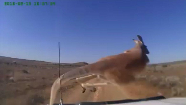 El video fue publicado por Dash Owners Australia y se viralizó en pocas horas.