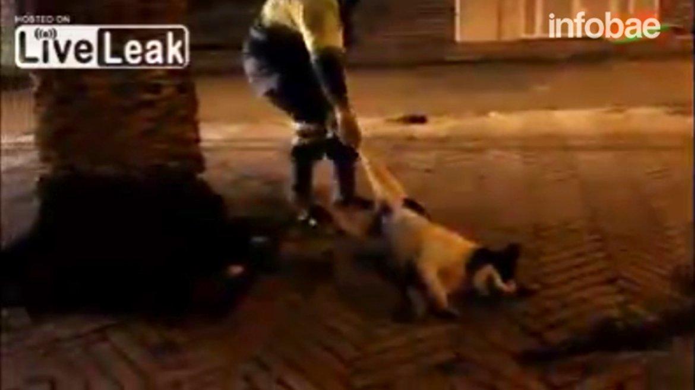 En la ciudad marroquí deKsar el-Kebir, al norte del país africano, las autoridades matan a tiros y sin piedad a decenas de animales vagabundos