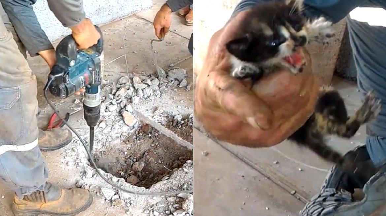 El impresionante rescate de los gatos